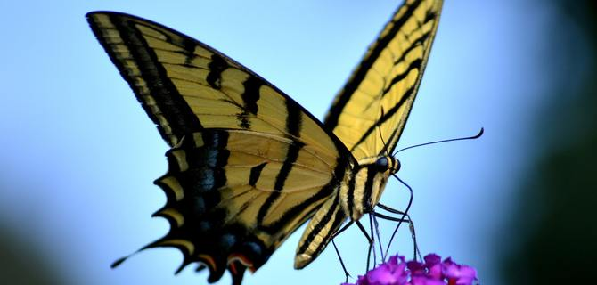 Explore the Rosine Smith Sammons Butterfly House and Insectarium in Dallas